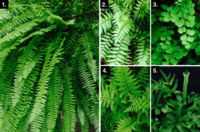 Quelles plantes pour mur v g tal ext rieur sofag for Quelles plantes pour un mur vegetal exterieur