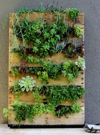 Mur vegetal exterieur palette sofag - Jardin vertical exterieur ...