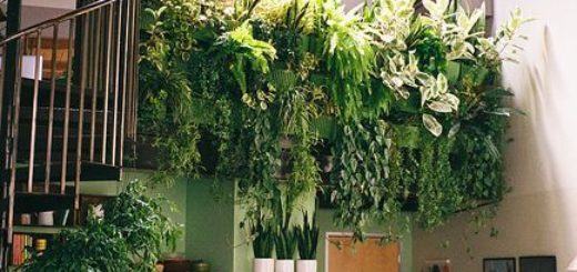 Fabriquer un mur vgtal mur vgtal palette with fabriquer un mur vgtal amazing mur vegetal - Comment faire un mur vegetal exterieur pas cher ...