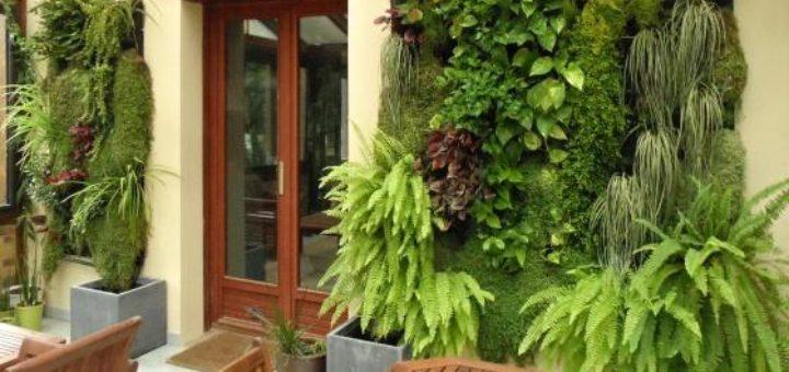 Mure vegetale exterieur simple amazonfr crer un mur vgtal for Mur vegetal exterieur quelles plantes