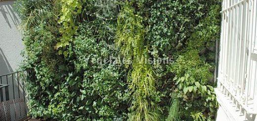 panneau vegetal exterieur amazing mur vgtal duintrieur. Black Bedroom Furniture Sets. Home Design Ideas