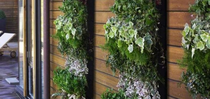 mur vegetal pas cher exterieur sofag