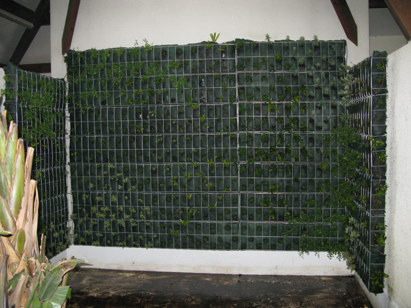 mur de vegetation exterieur sofag. Black Bedroom Furniture Sets. Home Design Ideas