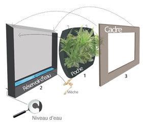 Cadre plantes mural sofag for Cadre mural plantes